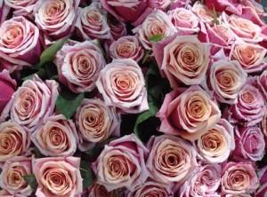 rosesvalentines