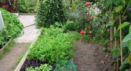 http://fresh.co.nz/wp-content/uploads/2012/03/vegetable-garden-460x250.jpg