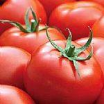 tomatoes_3