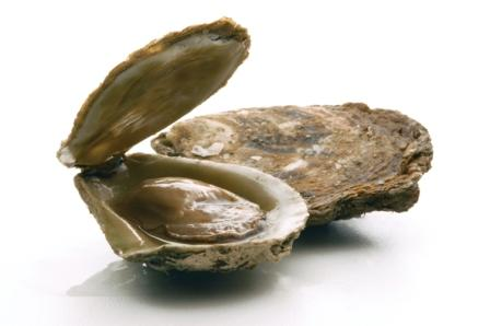 High Hopes for Bluff Oyster Season From 1 March Fresh Ideas