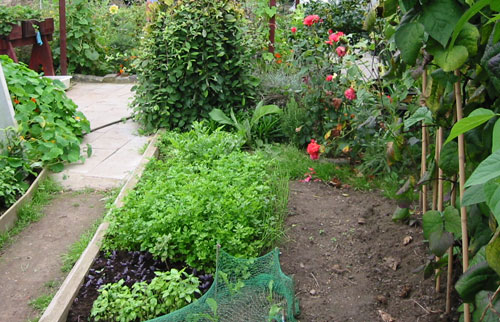 What to do in the garden early April Fresh Ideas