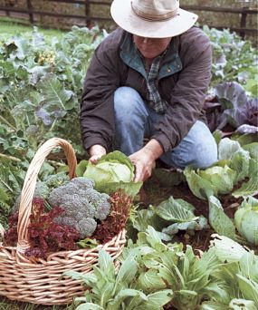 Things to Tackle in your winter vege garden fresh ideas