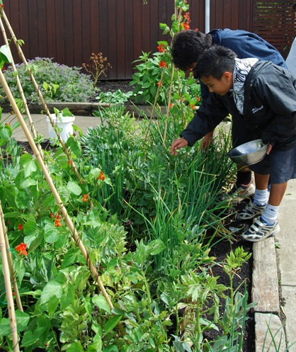 School children growing their own fresh ideas