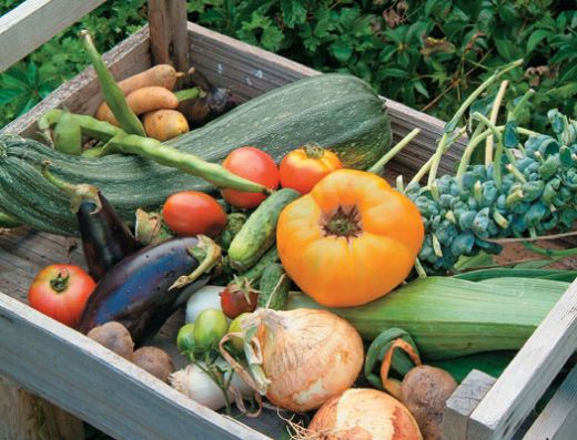 Vege thefts costing nz growers big time fresh ideas