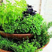 Top herbs for winter fresh ideas