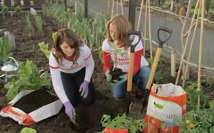Your Garden mid November fresh ideas