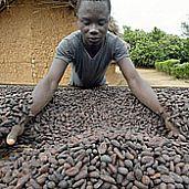 Good news for chocolate farmers fresh ideas