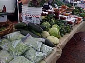 Pop up farmers market for quake hit suburbs fresh ideas