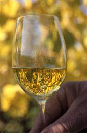 Another reason to love Marlborough Sauvignon Blanc fresh ideas